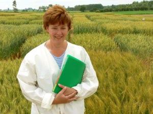 wheat seeds ontario