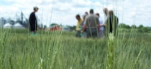 wheat seed ontario
